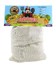 """9000 """"Fresh"""" Ladybugs - FREE SHIP- Guaranteed Live Delivery! Buy from the SOURCE"""