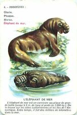 Elephant de mer Elephant seal See-Elefant PLAYING CARD CARTE A JOUER OLD ANCIEN