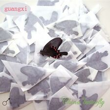 WHOLESALE 50 unmounted butterfly Papilio bianor CHINA artwork material A1