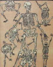 Japanese Medical Anatomy Dancing Skeleton Painting 8x10 Real Canvas Art Print