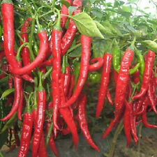 20Pcs Rare Giant Spices Red Spicy Chili Pepper Seeds Home Garden Vegetable Plant