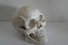 New Anatomical Human Skull - White - Table Decoration, Faux Taxidermy Medical