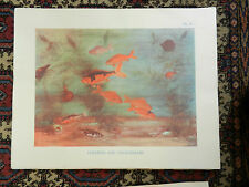 Vintage Schools Poster - Goldfish and Sticklebacks -   1930s / 1940s