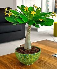 Hawaiian Palm Plant Tree Reception Living Bedroom Home House Decor Decoration UK