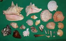 VTG SEA SHELL CRAZY MONEY CONCH MOLLUSK COWRY MONETA TUSK SNAIL CRAB ARTS CRAFT
