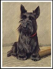 SCOTTISH TERRIER SEATED DOG LOVELY DOG PRINT POSTER