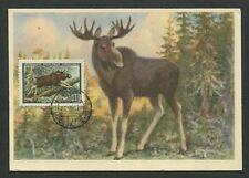 RUSSIA MK 1957 FAUNA ELCH MOOSE ELK MAXIMUMKARTE CARTE MAXIMUM CARD MC CM d7721