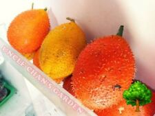 10 SEEDS GAC FRUIT RARE MOMORDICA COCHINCHINENSIS EXOTIC HEALTH BENEFIT 2016