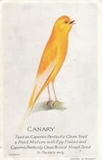 BIRD :Canary singing-CAPERNS plain back