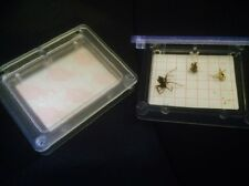 2 x SPIDER Traps catcher trap insect bug pest control killer false widow spiders