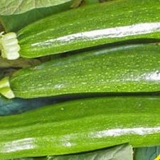 1 Lb Dark Green Zucchini Summer Squash Seeds - Gold Vault Bulk Seed Packet