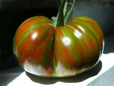 Chocolate Stripes Tomato Seeds!  GREAT MEATY TASTE! COMB. S/H SEE OUR STORE!