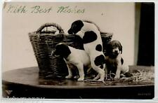 Basket with Puppies Dog Amazing Real Photo PC Circa 1920