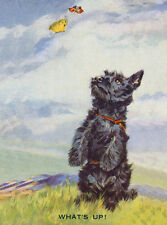 SCOTTISH TERRIER CHARMING SCOTTIE DOG GREETINGS NOTE CARD DOG WATCHES BUTTERFLY