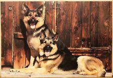 (PRL) CANE PASTORE TEDESCO ALSATIANS DOG CHIEN VINTAGE AFFICHE POSTER ART PRINT