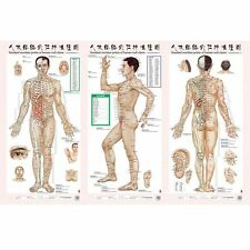 LEARN THE AMAZING ART OF ACUPUNCTURE