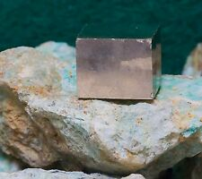 Collector Quality Pyrite Cubes Spain 006