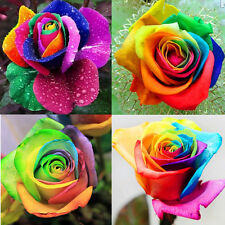 200pcs Colorful Rainbow Rose Flower Seeds Home Garden Plants Flower Seeds Lots