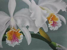 Linden Lindenia Large Print Orchid Cattleya Mossiae - 1888