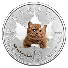 1 Oz Silver Maple Leaf Colour 2017 Cute Kittens British Short Hair Cat Cat Cat