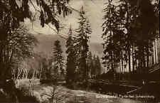 Schwarzatal in Thüringen s/w AK ~1920/30 Waldpartie  bei Schwarzburg Botanik