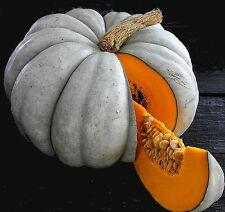 Blue Jarrahdale Pumpkin 15 Seeds - Decorative & Edible