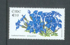 Flowers Spring gentian mnh-Ireland-Wildflowers