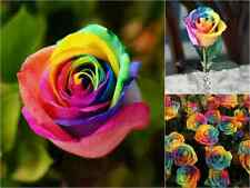 10 RAINBOW Rose Seeds Garden Gift Flower Rare Premium STRIPED Garden