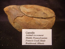 Mazon Creek Fossils Animal Excrement Coprolite Braidwood USA Awesome
