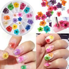 Nail Art Dry Dried 3D Colorful Flower Miniature Decoration Box For UV Gel Tip