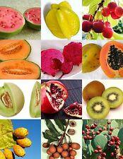 Mezcle 40 Fresh Tropical Mango, Ambi, árbol de rambután/Planta/Fruta Semillas de Asia