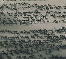 Libya CAMEL CARAVAN TOWARDS KUFRA OASIS / KAMEL KARAWANE * Archives' Photo 1934