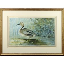 Framed Original Ornithological Anas Anacuta Pintail Duck Watercolour Painting