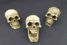 "Lot of 3 Mini Skull Head Figurine Celtic Knot 1.5"" Halloween Decoration Statue"