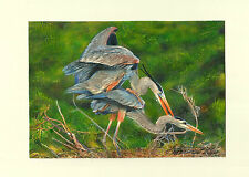 Great blue heron couple taking care of the next generation, watercolors