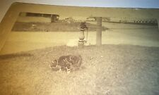 Antique Victorian American Outdoor Pet Cat on Grass! Family Animal Cabinet Photo