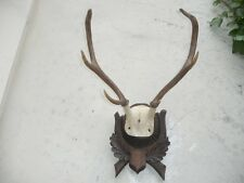 VINTAGE BLACK FOREST RED DEER STAG ANTLERS MOUNT of a MOUNTAIN STAG