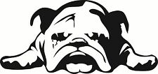 "English Bulldog Vinyl Decal ""Sticker"" For Car or Truck Windows, Laptops, etc"