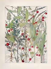 Lily of the Valley- Wild Flower Botanical Print by Isabel Adams - Antique Print