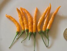 10 Thai Giant Orange peppers Seeds,Heirloom,Organic,Chili, Great in container