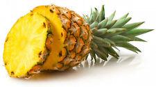 100 + Pcs Pineapple Seeds Sweet Juicy Delicious Fruit Seeds Rare Exotic Bonsai