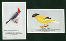 TWO POSTCARD SIZED CARDS – BIRDS – CAPERN'S BIRD SEEDS – 1926