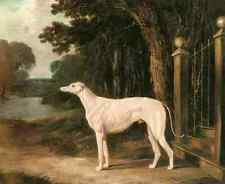 Metal Sign Herring Snr John Frederick Vandeau A White Greyhound A4 12x8 Aluminiu