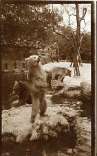 Photo ancienne vintage snapshot ours bear zoo 1930