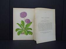 Botanicals Alpine Plants Wooster 1874 #06 Primula Pulcherrima