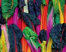 100 Rainbow Swiss Chard Five Color Silverbeet Seeds Heirloom Organic No GMO RARE