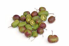 ! ora è possibile deliziosa Kiwi autonomamente in giardino raccolti. comprare subito.