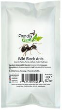 Edible Insects Bugs Wild Black Ants 6g Crunchy Critters