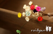 Mini  Dyed Dry Flower Small Daisy Flowers for Jewelry Making Craft DIY Findings