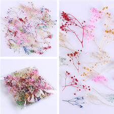10g/set 3D Nail Art Decoration Dried Babysbreath Pretty Preserved Flower DIY